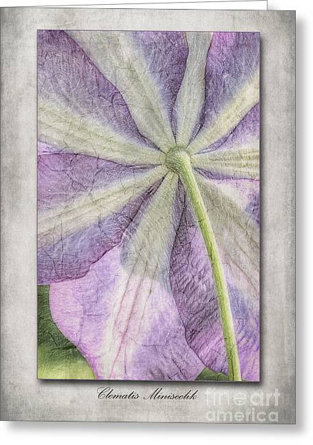 Descriptive Greeting Cards - Clematis Miniseelik  Greeting Card by John Edwards