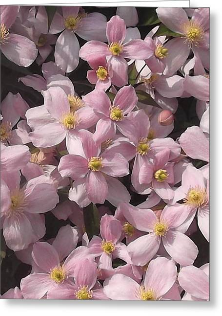 English Greeting Cards - Clematis montana rubens Greeting Card by Geoff Ford