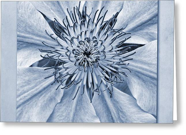 Nectar Greeting Cards - Clematis Nelly Moser Cyanotype Greeting Card by John Edwards