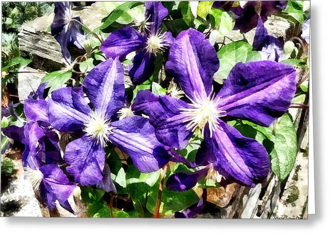 Florals Greeting Cards - Clematis on a Stone Wall Greeting Card by Susan Savad