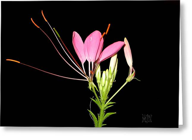 Cleome Greeting Card by J R Baldini Master Photographer