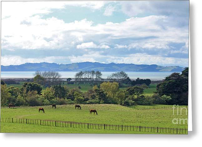 Clevedon Kawakawa Horses Greeting Card by Gee Lyon