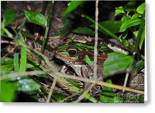 Brown Frog Greeting Cards - Clever Camo Greeting Card by Al Powell Photography USA