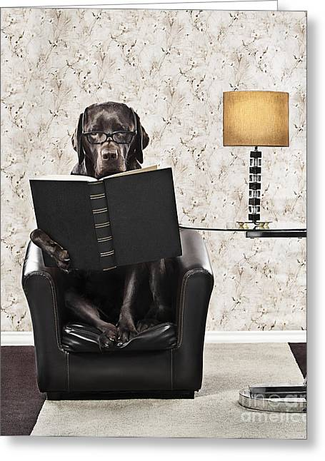Clever Greeting Cards - Clever Dog Reading Book Greeting Card by Justin Paget