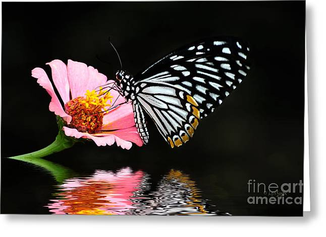 Butterfly On Flower Greeting Cards - Cliche Greeting Card by Lois Bryan