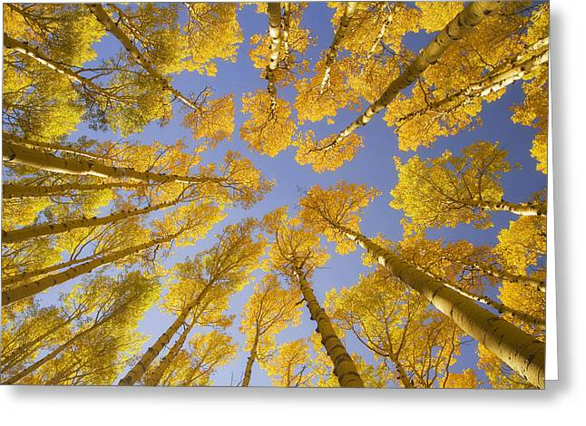 Cliche Greeting Cards - Cliche Greeting Card by Peter Coskun