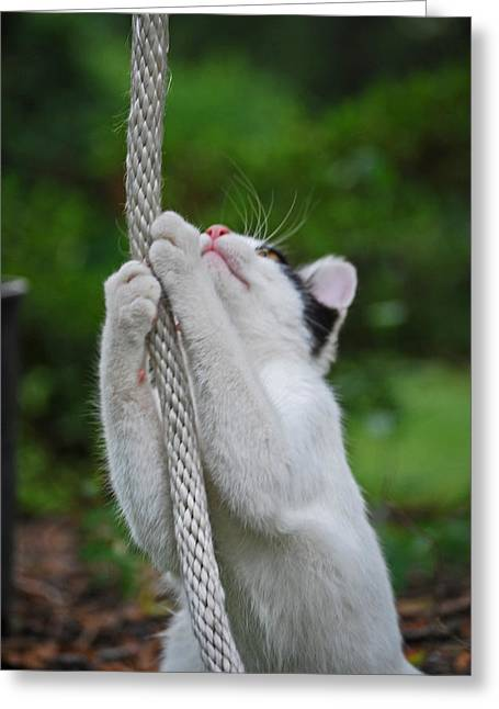 Photo Of Cat Greeting Cards - Climber Greeting Card by Skip Willits