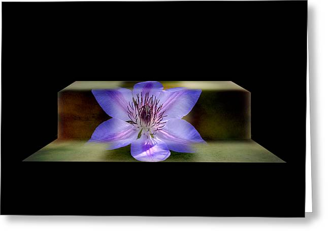 Climbing Clematis Greeting Card by Steven  Michael
