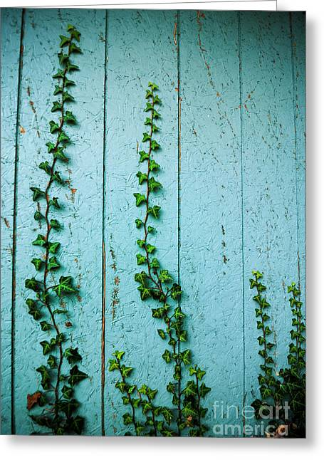 Overgrown Greeting Cards - Climbing Ivy Greeting Card by Amy Cicconi