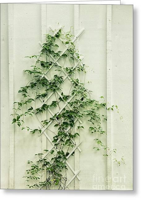 Trellis Greeting Cards - Climbing Greeting Card by Margie Hurwich