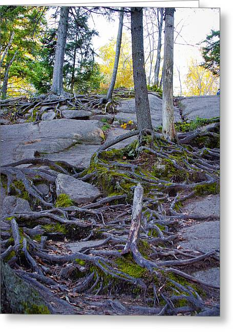 Fir Trees Greeting Cards - Climbing the Rocks of Bald Mountain Greeting Card by David Patterson