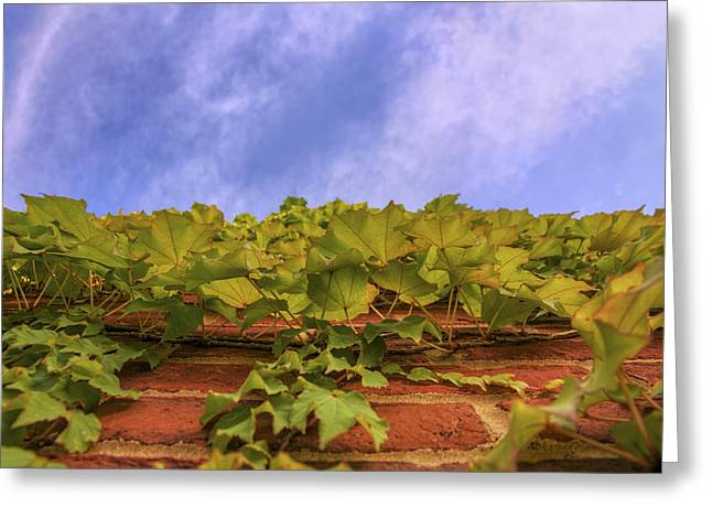 Conway Arkansas Greeting Cards - Climbing the Walls - Ivy - Vines - Brick Wall Greeting Card by Jason Politte