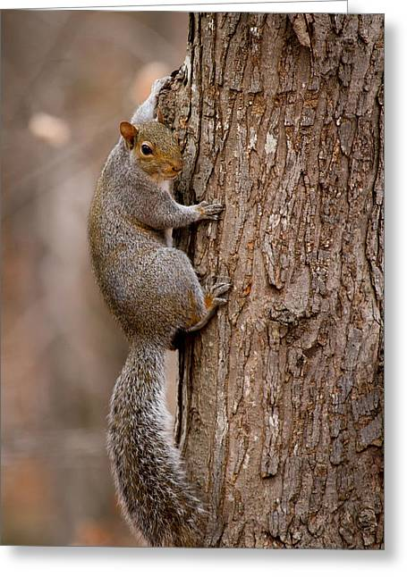 Clinging Greeting Cards - Clinging On Greeting Card by Nathaniel Kidd