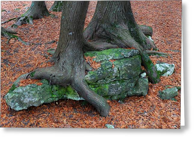 Tree Roots Greeting Cards - Clinging to the Rock Greeting Card by David T Wilkinson