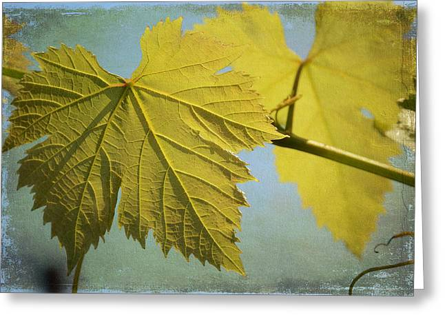 Grape Vines Greeting Cards - Clinging To The Vine Greeting Card by Fraida Gutovich