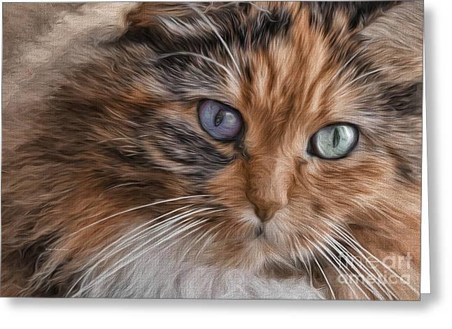 Deborah Greeting Cards - Cloe Kitty Greeting Card by Deborah Benoit