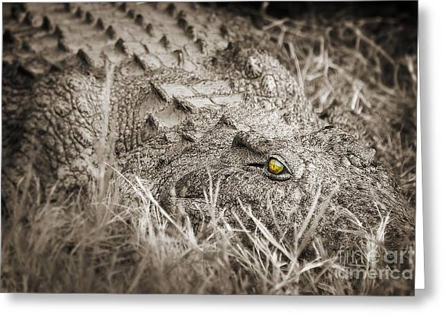 Zambezi River Greeting Cards - Close crocodile  Greeting Card by Delphimages Photo Creations
