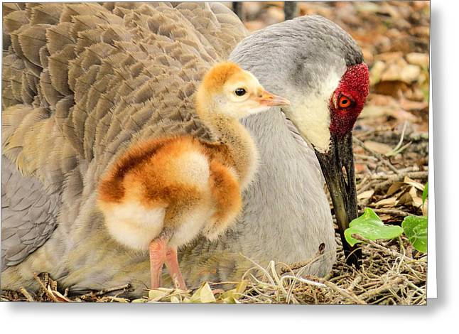 Close To Mother Greeting Card by Zina Stromberg