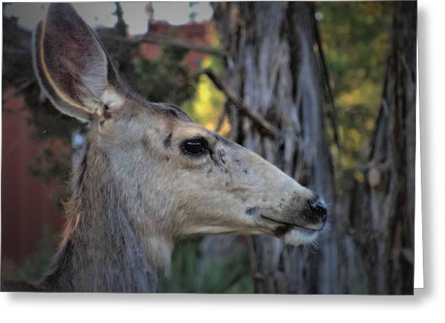 Deer Camp Greeting Cards - Close Up Greeting Card by Dan Sproul