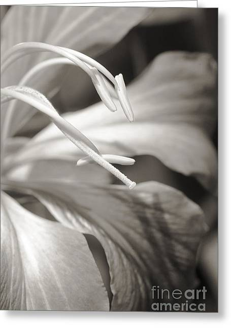 Grow Inside Greeting Cards - Close-up detail of a hong kong orchid _black and white photograph_ Greeting Card by Allan Seiden