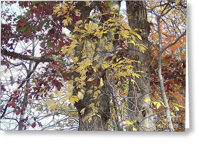 Close Up Fall Tree  Greeting Card by Angelia Hodges Clay