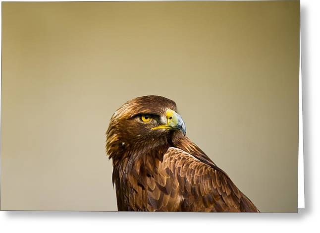 Golden Eagle Greeting Cards - Close-up Of A Golden Eagle Aquila Greeting Card by Panoramic Images