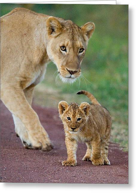 Wildcat Greeting Cards - Close-up Of A Lioness And Her Cub Greeting Card by Panoramic Images