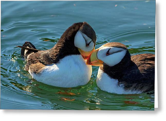 Close Up Of A Pair Of Horned Puffins Greeting Card by Marion Owen