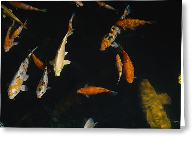School Of Fish Greeting Cards - Close-up Of A School Of Fish In An Greeting Card by Panoramic Images