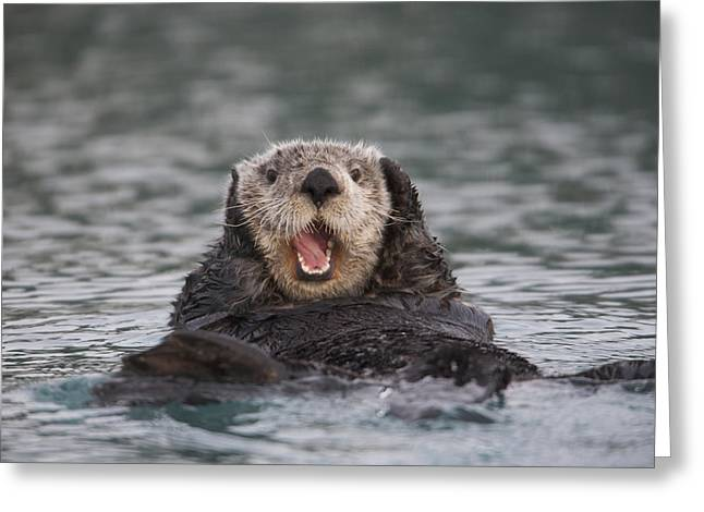 Surprise Greeting Cards - Close Up Of A Sea Otter Swimming Greeting Card by Milo Burcham