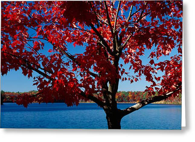 Concord Greeting Cards - Close-up Of A Tree, Walden Pond Greeting Card by Panoramic Images
