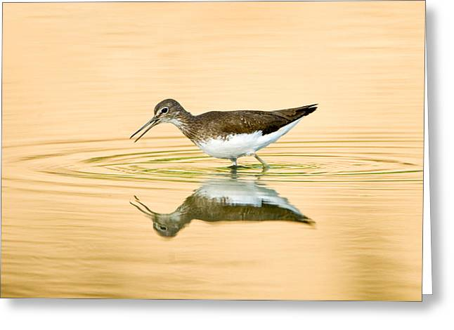 Ripples In The Water Greeting Cards - Close-up Of A Wood Sandpiper Tringa Greeting Card by Panoramic Images