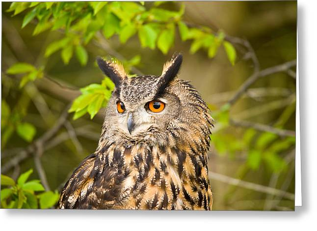Bird On Tree Greeting Cards - Close-up Of An Eagle Owl Greeting Card by Panoramic Images