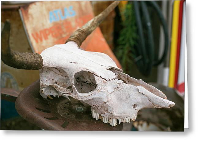 Close Up Of An Old Cow Skull Greeting Card by Julien Mcroberts