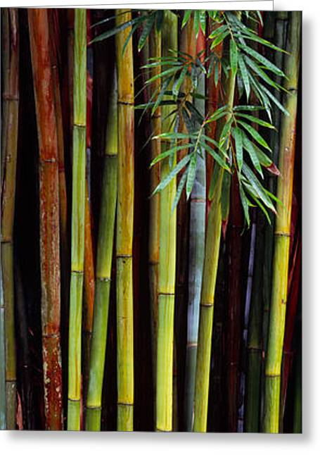 Gainesville Greeting Cards - Close-up Of Bamboos, Kanapaha Botanical Greeting Card by Panoramic Images