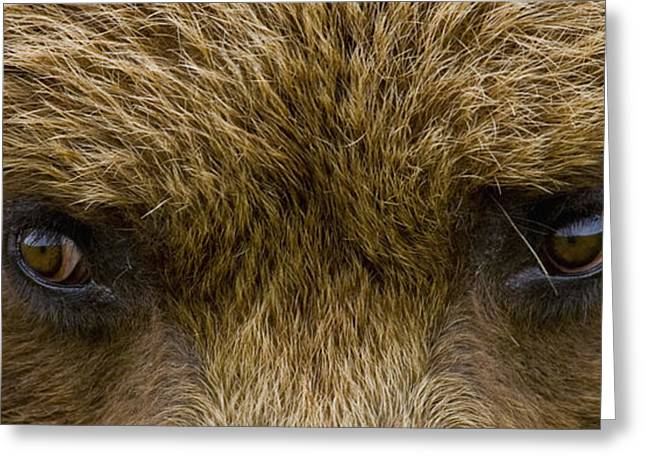 Harts Greeting Cards - Close Up Of Brown Bears Eyes In Hallo Greeting Card by Cathy Hart
