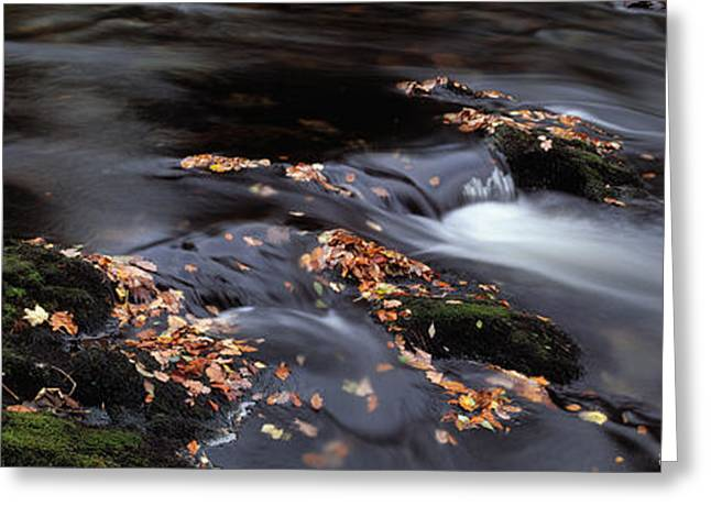Fallen Leaf Greeting Cards - Close-up Of Dart River And Fallen Greeting Card by Panoramic Images