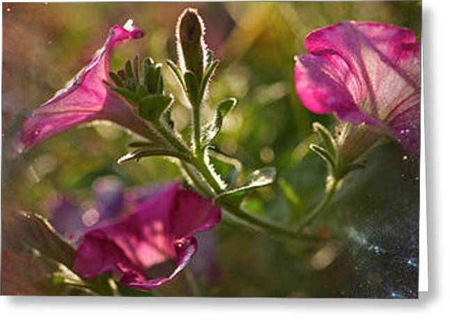 Surreal Photography Greeting Cards - Close-up Of Flowers And Universe Greeting Card by Panoramic Images