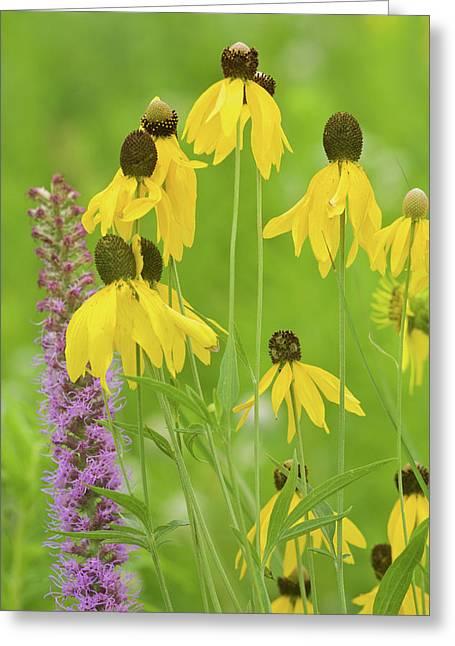 Close-up Of Flowers Blooming Greeting Card by Panoramic Images