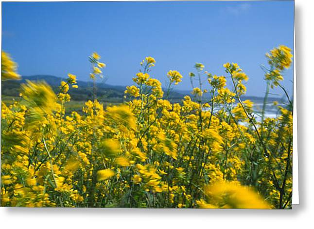 Flowers In California Greeting Cards - Close-up Of Flowers, California, Usa Greeting Card by Panoramic Images
