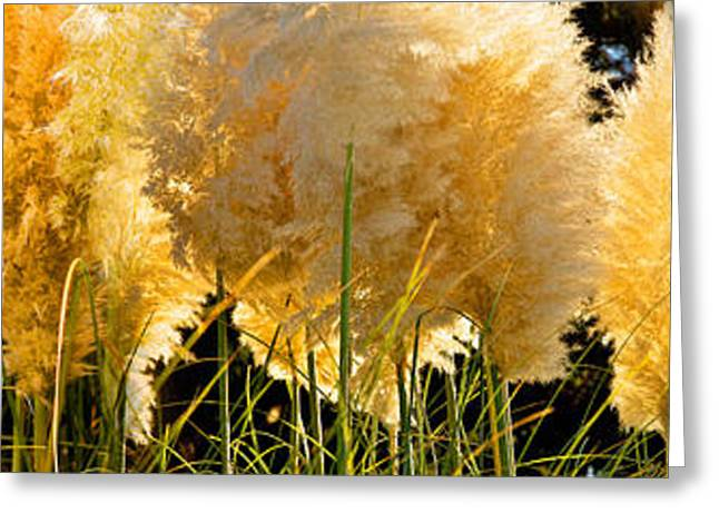 Recovery Greeting Cards - Close-up Of Grass Greeting Card by Panoramic Images