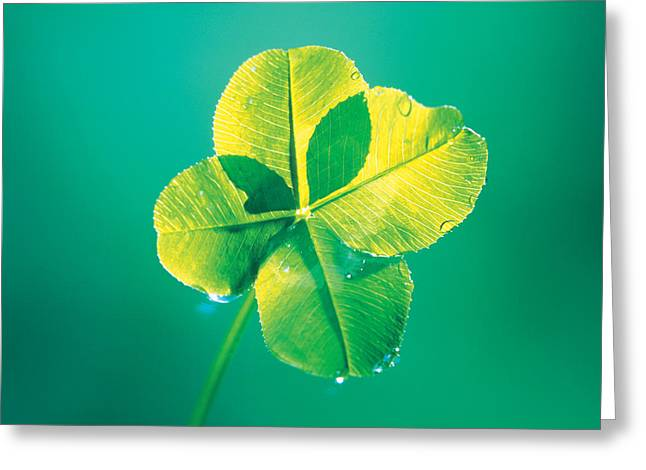 Close Up Photography Greeting Cards - Close Up Of Green Leaf Sprig On Dark Greeting Card by Panoramic Images
