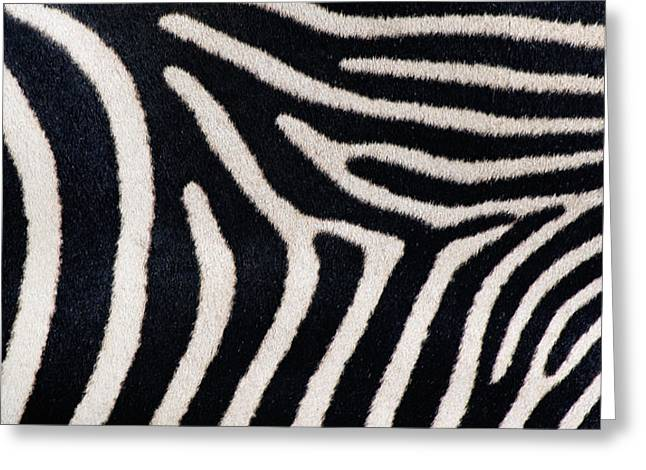 Close-up Of Greveys Zebra Stripes Greeting Card by Panoramic Images