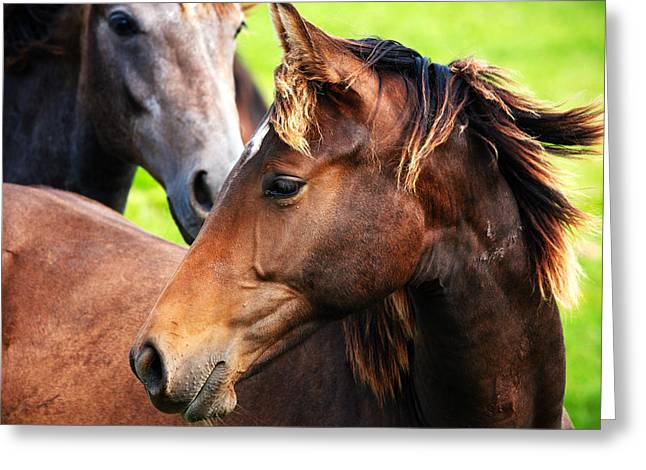 Close Focus Nature Scene Greeting Cards - Close-up of horses Greeting Card by Jan Brons