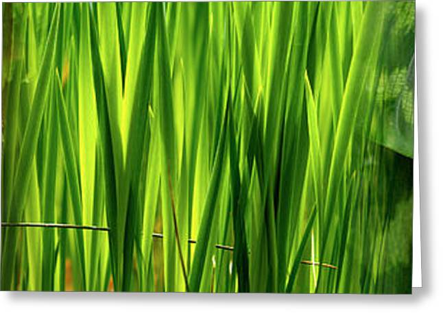 Blade Of Grass Greeting Cards - Close-up Of Leaves Greeting Card by Panoramic Images