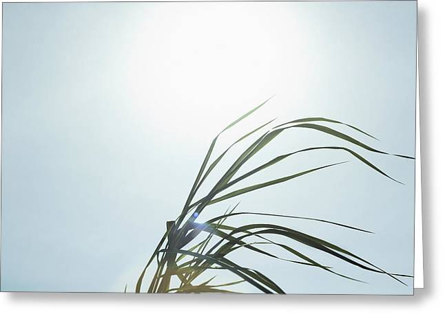 Flare-up Greeting Cards - Close-up Of Long Blades Of Grass Greeting Card by Bruno Crescia