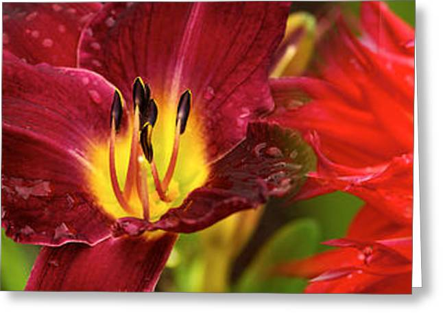 Stamen Greeting Cards - Close-up Of Orange Flowers Greeting Card by Panoramic Images
