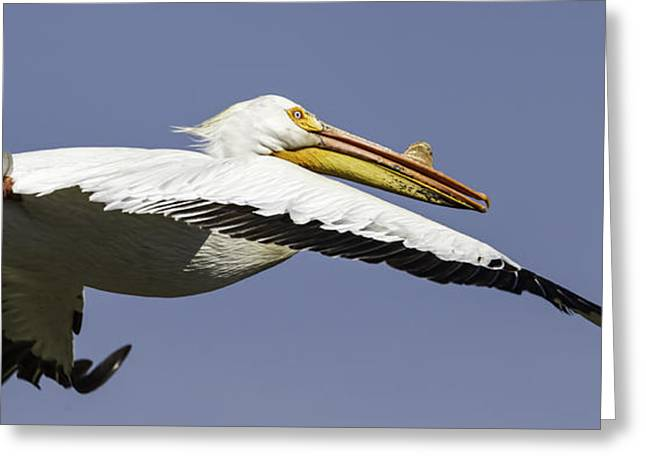 Flying White Pelicans Greeting Cards - Close Up Of Pelican In Flight Greeting Card by Thomas Young