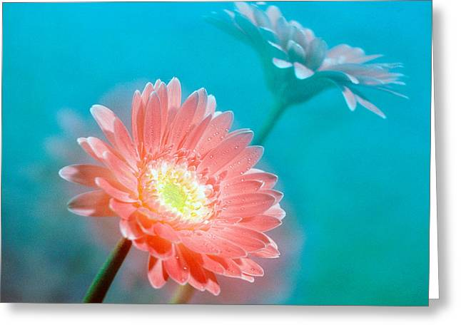 Close Up Of Pink And Lavender Flowers Greeting Card by Panoramic Images