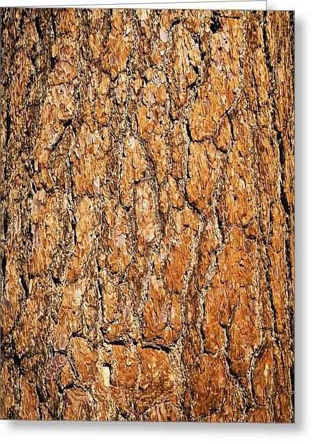 Close Up Of Ponderosa Pine Tree Bark Greeting Card by Charmian Vistaunet